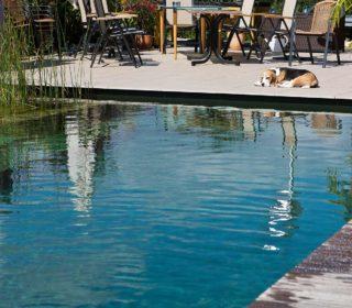 Schwimmteich mit Bepflanzung