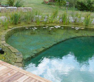 Schwimmteich mit klarem Wasser