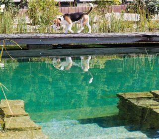 Schwimmteich mit Steinmauer